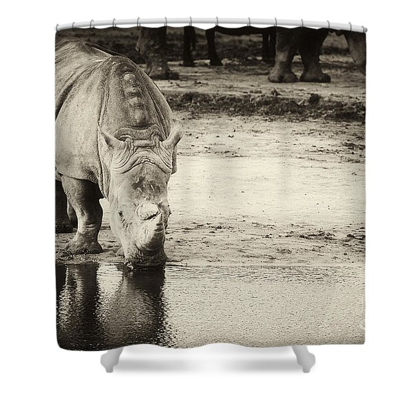 Two White Rhinos  Shower Curtain