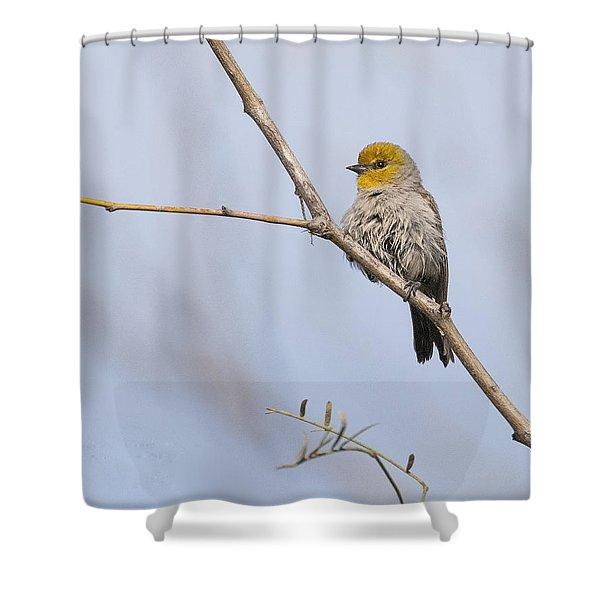 Verdin Shower Curtain