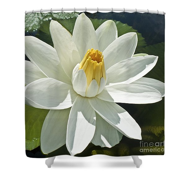 White Water Lily - Nymphaea Shower Curtain