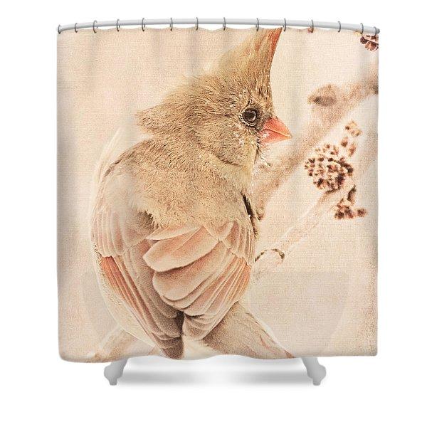 Winter Cardinal Shower Curtain