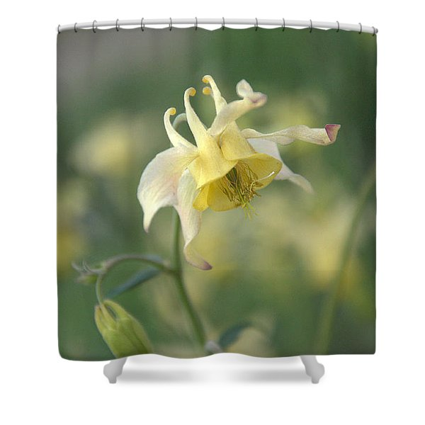Yellow Columbine Shower Curtain