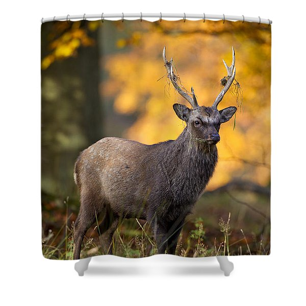 110307p073 Shower Curtain