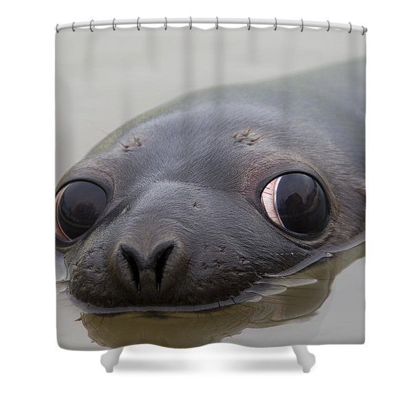 110714p127 Shower Curtain