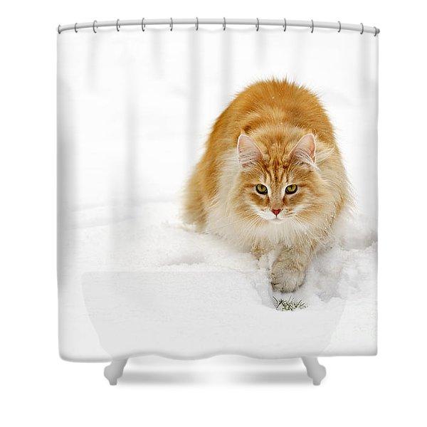 111230p310 Shower Curtain