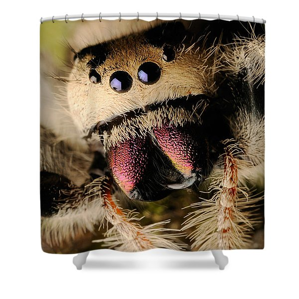 Regal Jumping Spider Shower Curtains | Fine Art America