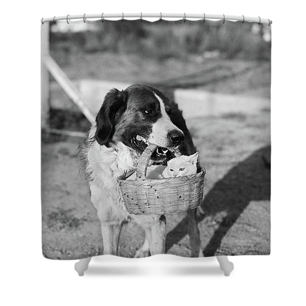 1930s Dog Holding Cat In Straw Basket Shower Curtain