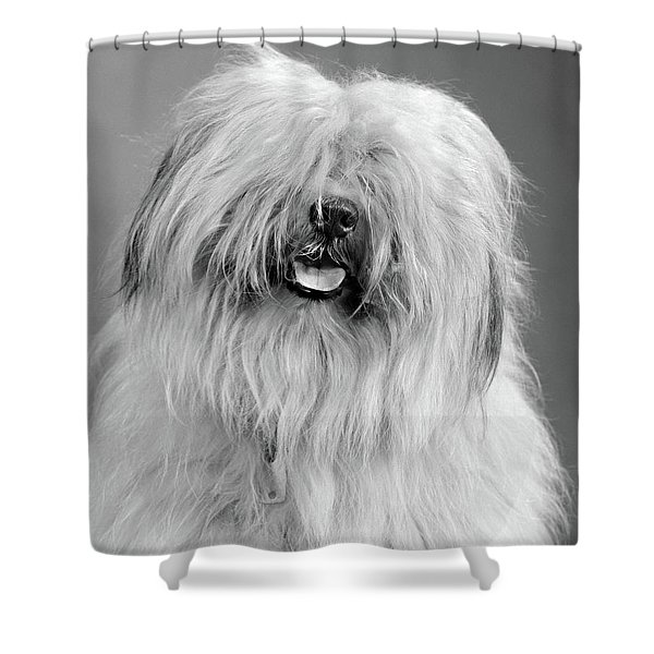 1960s Portrait Of Old English Sheepdog Shower Curtain