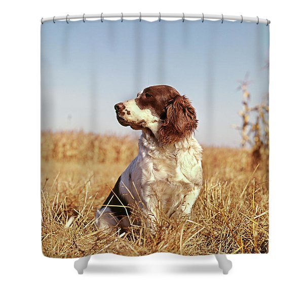 1970s Hunting Dog In Autumn Field Shower Curtain