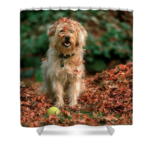 1980s Shaggy Beige And White Dog Shower Curtain