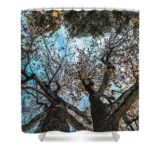 1st Tree Shower Curtain