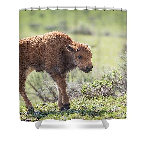Bison Calf Shower Curtain
