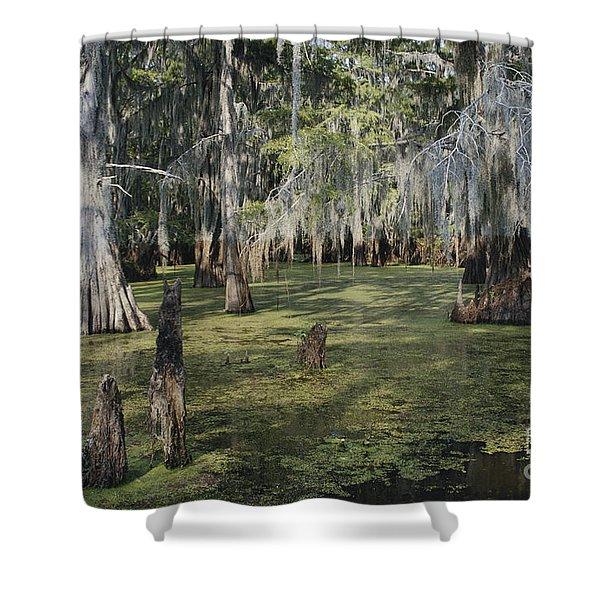 Caddo Lake, Texas Shower Curtain
