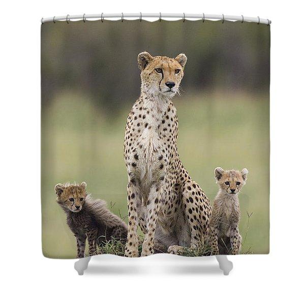Cheetah Mother And Cubs Maasai Mara Shower Curtain