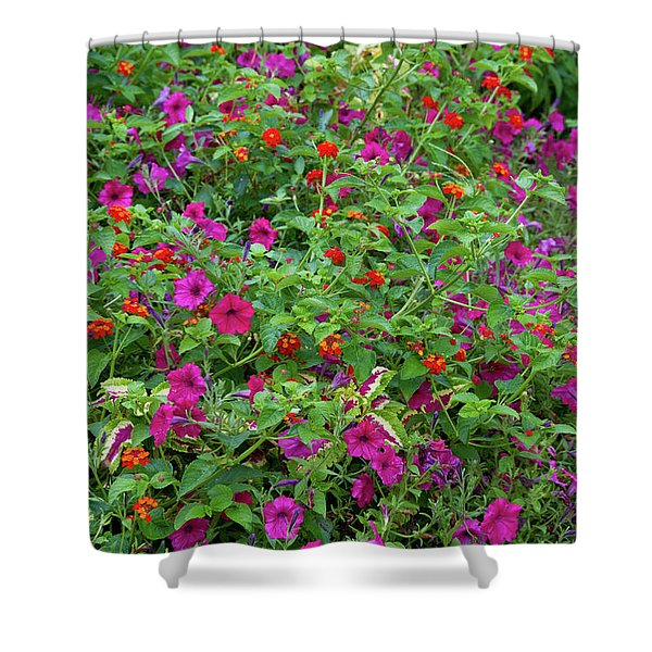 Close-up Of Multi-colored Flowers Shower Curtain