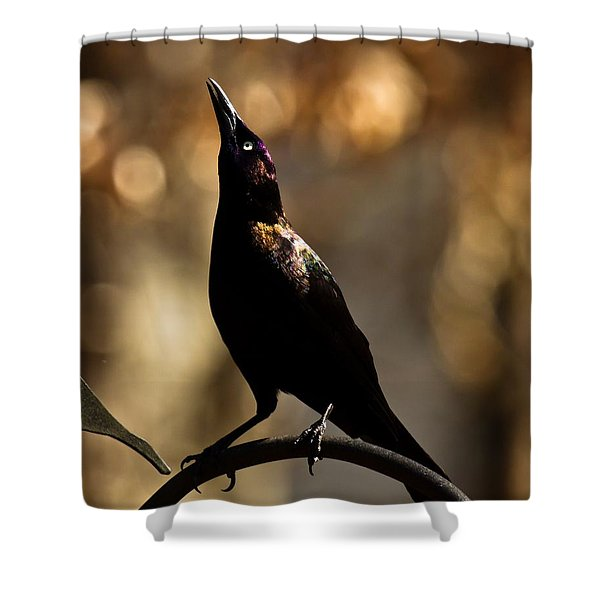 Shower Curtain featuring the photograph Common Grackle by Robert L Jackson