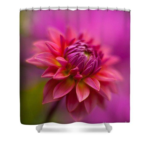 Dahlia Burst Shower Curtain