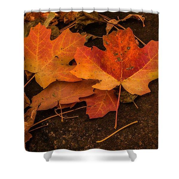 West Fork Fallen Leaves Shower Curtain