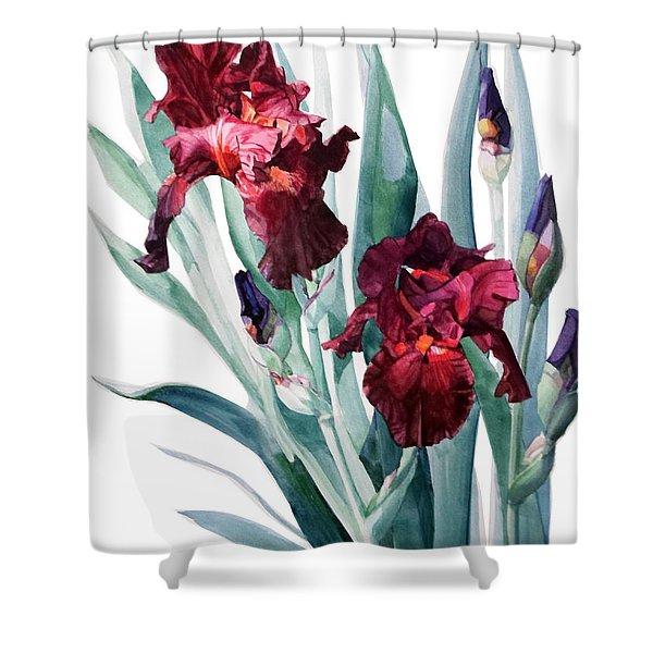 Dark Red Tall Bearded Iris Donatello Shower Curtain