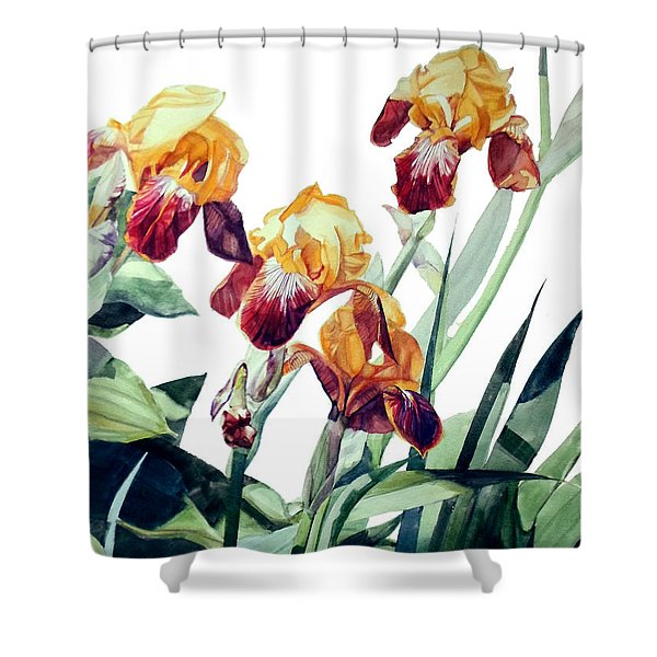 Watercolor Of Tall Bearded Irises I Call Iris La Vergine Degli Angeli Verdi Shower Curtain