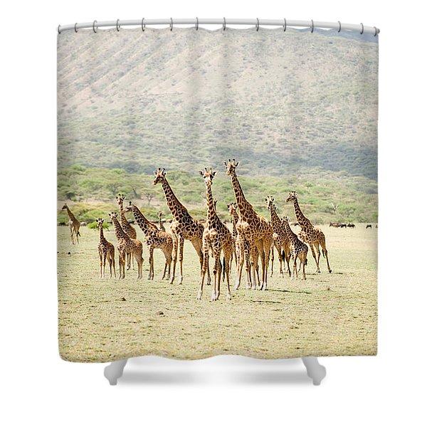 Masai Giraffes Giraffa Camelopardalis Shower Curtain