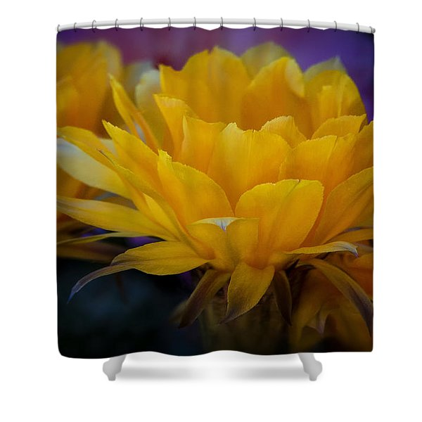 Orange Cactus Flowers  Shower Curtain