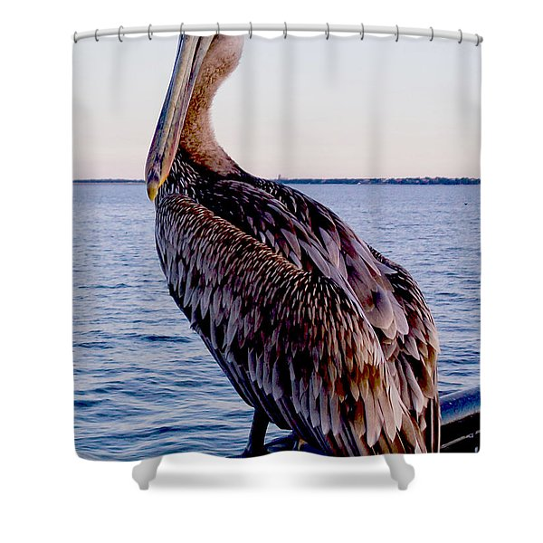 Pelican At Port Shower Curtain