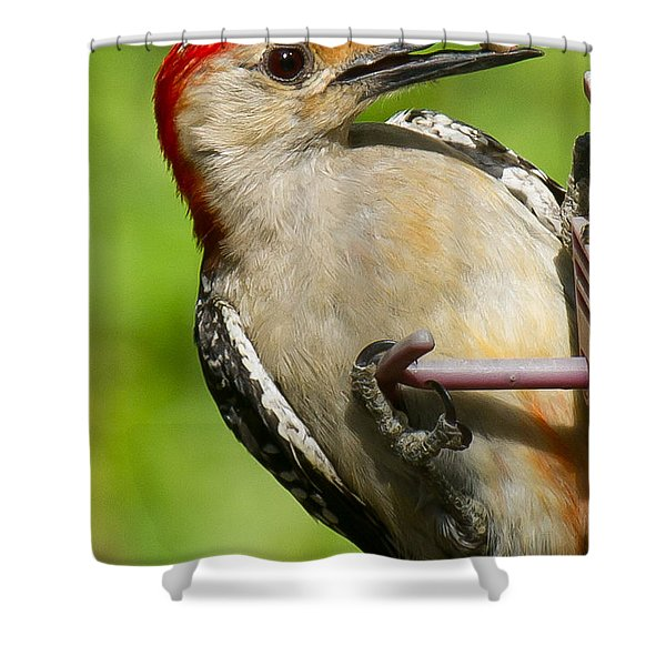 Shower Curtain featuring the photograph Red Bellied Woodpecker by Robert L Jackson