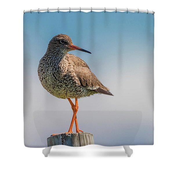 Redshank Tringa Totanus, Flatey Island Shower Curtain