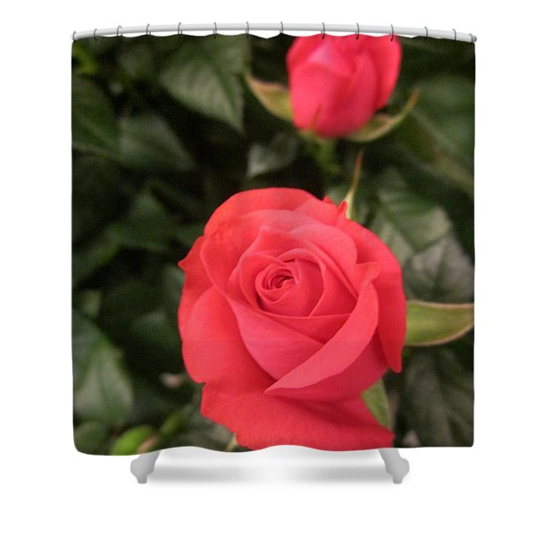 Roses In Red Shower Curtain