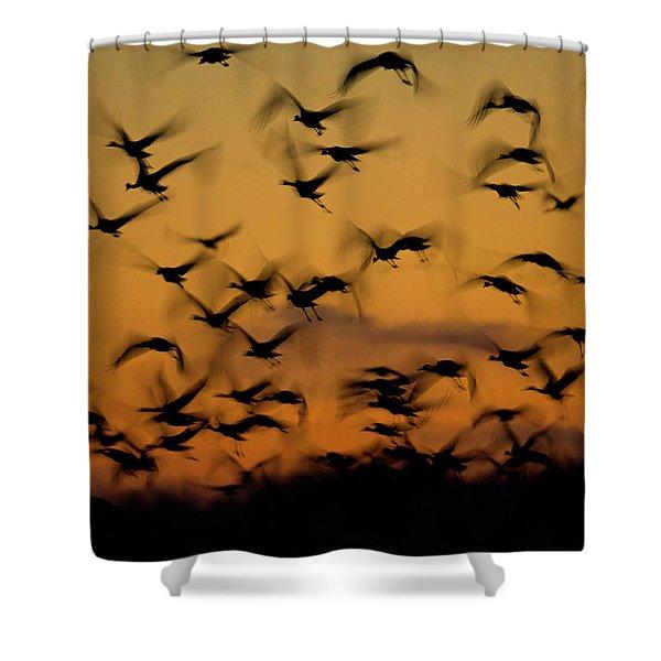 Sandhill Migration Shower Curtain