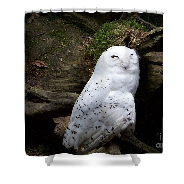 Shower Curtain featuring the photograph Snowy Owl by Charles Robinson