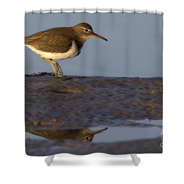 Spotted Sandpiper Reflection Shower Curtain