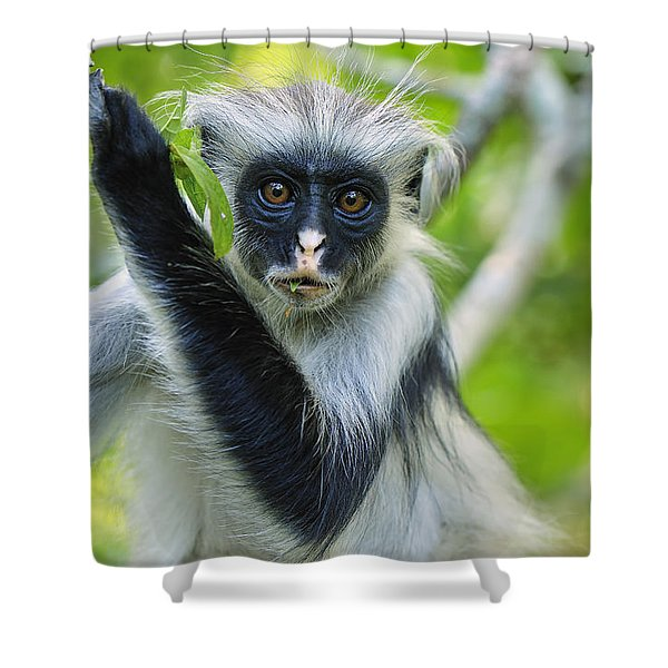 Zanzibar Red Colobus In Tree Jozani Shower Curtain