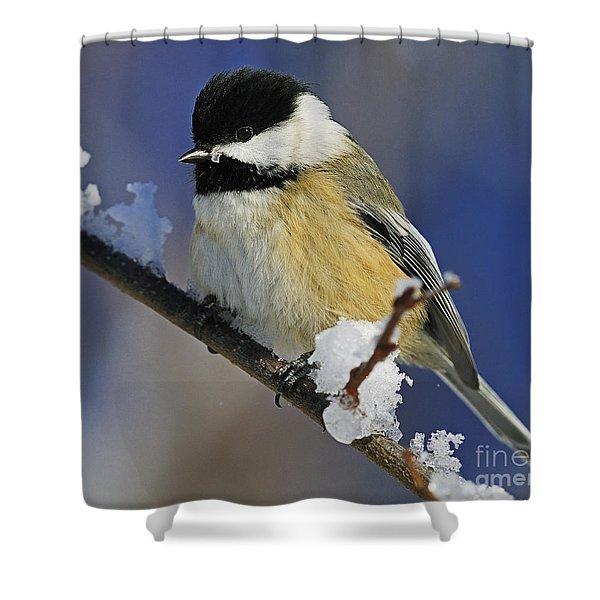 Winter Chickadee... Shower Curtain