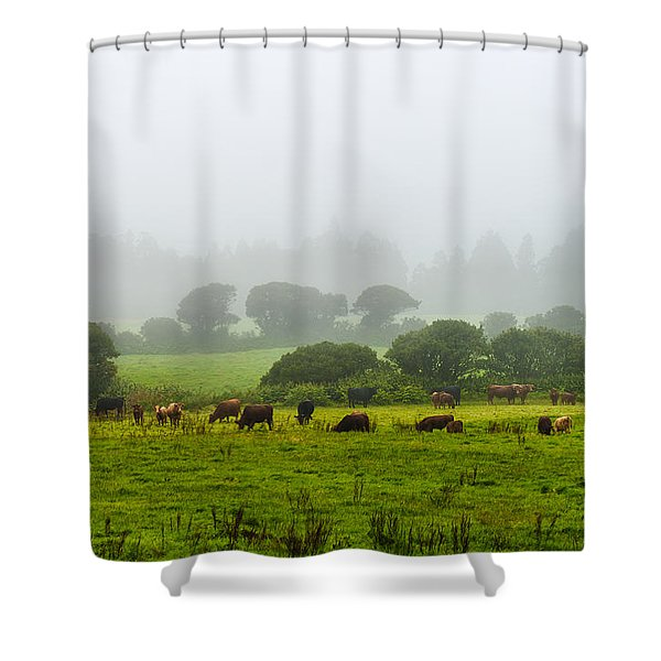 Cows At Rest Shower Curtain