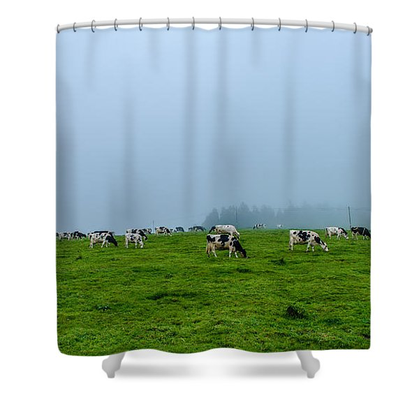 Cows In The Field Shower Curtain