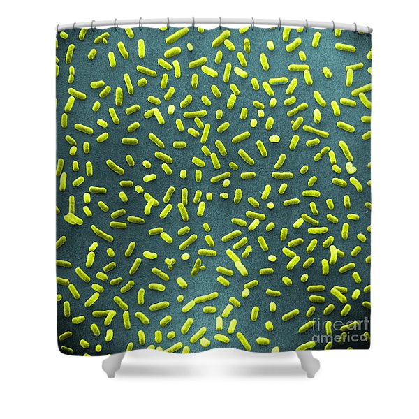 E. Coli Bacteria Sem Shower Curtain