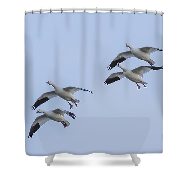 Flying Snow Geese Shower Curtain