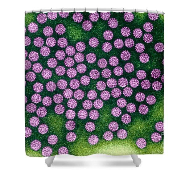 Human Papillomavirus Shower Curtain