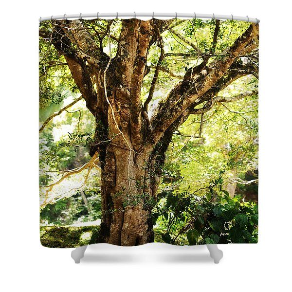 Kingdom Of The Trees. Peradeniya Botanical Garden. Sri Lanka Shower Curtain