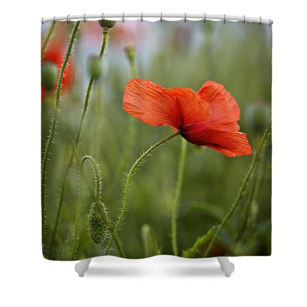 Red Poppy Flowers Shower Curtain