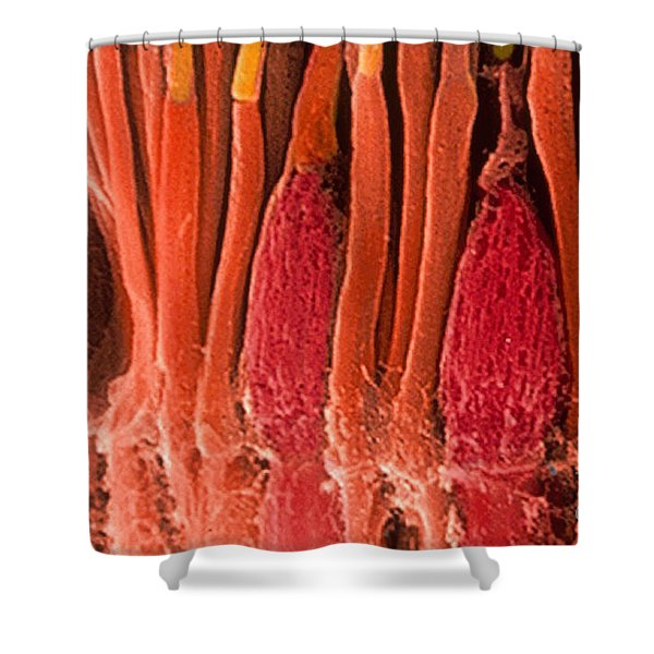 Rods And Cones, Sem Shower Curtain
