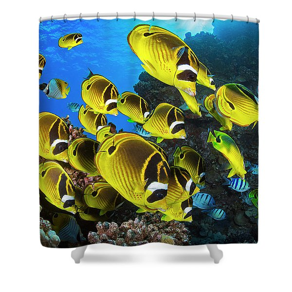 Schooling Raccoon Butterflyfish Shower Curtain