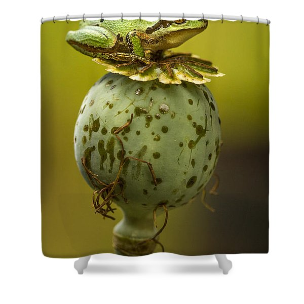 Balancing Act Shower Curtain
