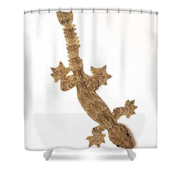 Flying Gecko Shower Curtain