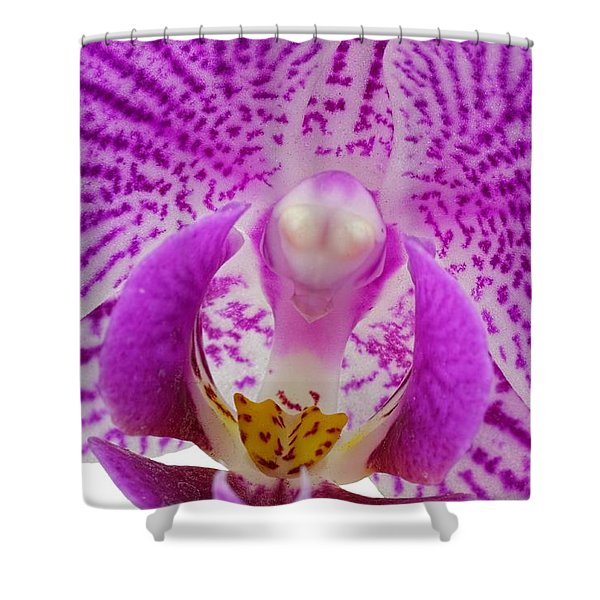 Purple Orchid-7 Shower Curtain