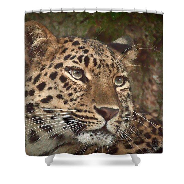 Amur Leopard Shower Curtain