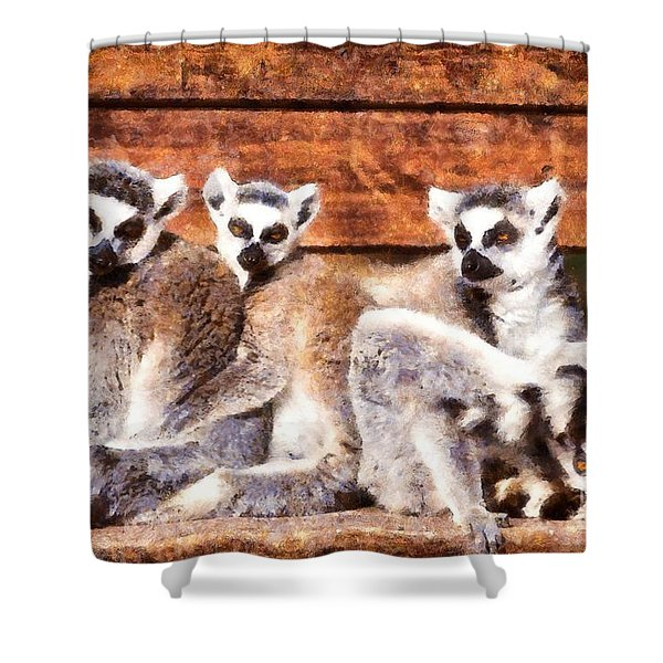 Ring Tailed Lemurs Shower Curtain