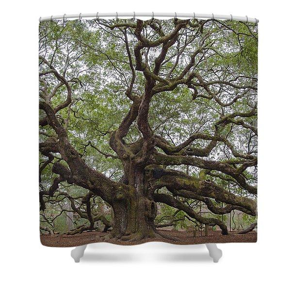 Sc Angel Oak Tree Shower Curtain