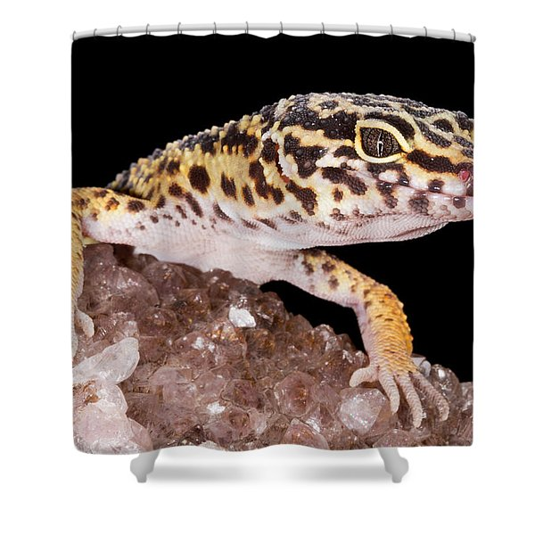 Leopard Gecko Eublepharis Macularius Shower Curtain